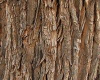 Oude cottonwoodschors Stock Fotografie