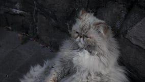 Oude dakloze kat op de straat stock footage