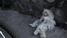 Oude dakloze kat op de straat stock videobeelden