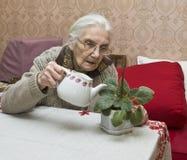 Oude dame het water geven bloem stock foto's