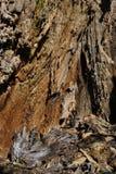 Oude de boomstamtextuur van de barsten bouwvallige boom, onscherpe achtergrond, verticale dichte omhooggaand royalty-vrije stock foto
