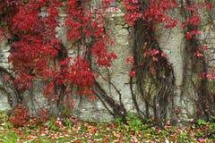 Oude de bouwmuur in de herfst stock fotografie