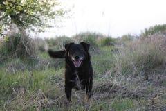 Oude de jachtwaakhond, mooi portret van een hond in de lente op het gebied stock afbeelding