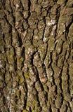 Oude de schorstextuur van de perenboom met mos stock foto's