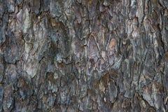 Oude de schorstextuur van de regenboom Stock Afbeeldingen