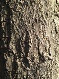 Oude de textuurachtergrond van de boomschors Royalty-vrije Stock Afbeelding