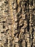Oude de textuurachtergrond van de boomschors Stock Fotografie