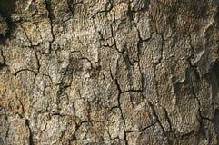 Oude de textuurachtergrond van de boomschors Stock Foto's