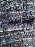 Oude de textuurachtergrond van de kokospalmschors Stock Afbeeldingen