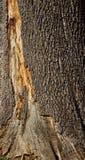 Oude de textuurclose-up van de boomschors Stock Afbeeldingen
