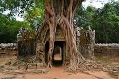 Oude die Angkor-Eratempel door bomen wordt overwoekerd Stock Foto