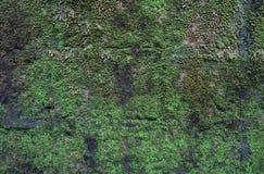 Oude die bakstenen muur intensief met mos wordt behandeld stock foto's