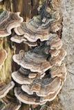 Oude die boomboomstam met paddestoel wordt behandeld Stock Foto's