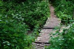 Oude die metselwerkbrug over moerasstroom door weelderig gebladerte wordt omringd Stock Foto's
