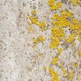 Oude die muur met korstmos wordt behandeld royalty-vrije stock fotografie