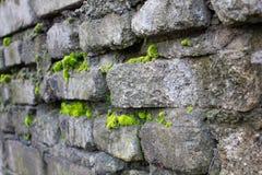 Oude die muur met mos wordt behandeld stock afbeeldingen