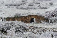 Oude die steenbrug in de sneeuwwinter wordt behandeld stock foto