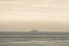 Oude die veerboot op het Wadden Overzees door vogels wordt omringd stock afbeelding