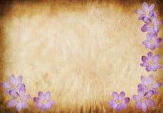 Oude document achtergrond met bloemenelementen Stock Afbeelding
