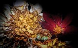Oude dode bloemen stock foto's