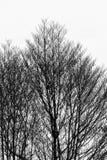 Oude dode boom Royalty-vrije Stock Afbeeldingen