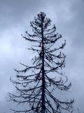 Oude dode boom. Royalty-vrije Stock Fotografie