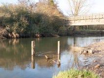 oude dode houten stompen die zich in het waterlandschap van het riviermeer bevinden royalty-vrije stock fotografie