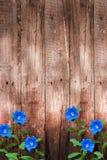 Oude donkere houten muur met blauwe bloemenachtergrond Royalty-vrije Stock Afbeelding