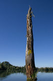 Oude doorstane boomstam Stock Afbeeldingen