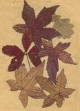 Oude droge bladeren royalty-vrije stock afbeeldingen
