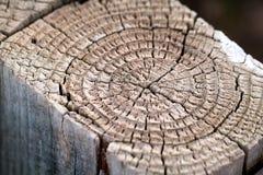 Oude droge boom Stock Foto