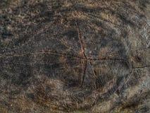 Oude droge boomsectie met jaarringen royalty-vrije stock fotografie