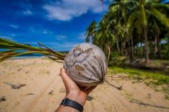 Oude droge kokosnoot op de strandachtergrond met palmen royalty-vrije stock foto