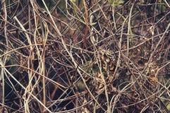 Oude droge wijnstokken op een close-up van het metaalnet abstracte achtergrond royalty-vrije stock foto