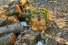 Oude droog opent het bos het programma stock foto's
