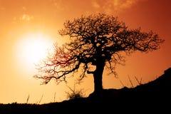 Oude eik in zonsondergang royalty-vrije stock afbeelding