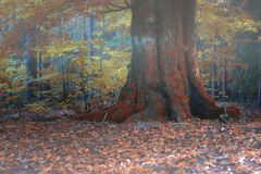 Oude eiken boom in mist royalty-vrije stock fotografie