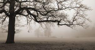Oude eiken boom, mistige voorwaarden stock afbeelding