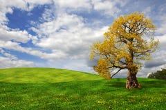 Oude eiken boom op het gebied Royalty-vrije Stock Foto