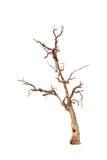 Oude en dode boom Stock Afbeeldingen