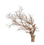 Oude en dode boom Stock Foto