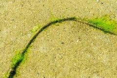 Oude en dunne kabel die op het strand, het groene mos of de algen liggen Royalty-vrije Stock Afbeeldingen