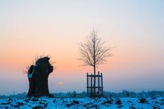 Oude en jonge boom bij zonsopgang in wintertijd royalty-vrije stock foto