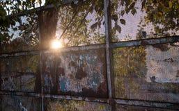 Oude en roestige poort met een straal van zon voor een boom royalty-vrije stock afbeelding