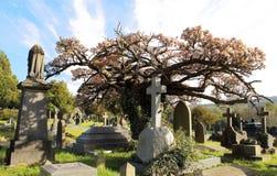 Oude, Engelse begraafplaats met bloeiende boom stock afbeeldingen
