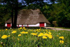 Oude farmhous op een zonnige dag Royalty-vrije Stock Foto's
