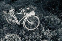 Oude fiets in de tuin met bloemendoos royalty-vrije stock fotografie