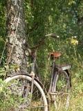 Oude fiets in het hout royalty-vrije stock afbeelding