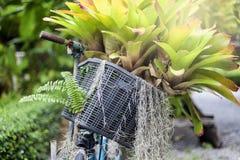 Oude fiets met bloemen Stock Foto