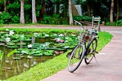 Oude fiets naast lotusbloemvijver Stock Fotografie